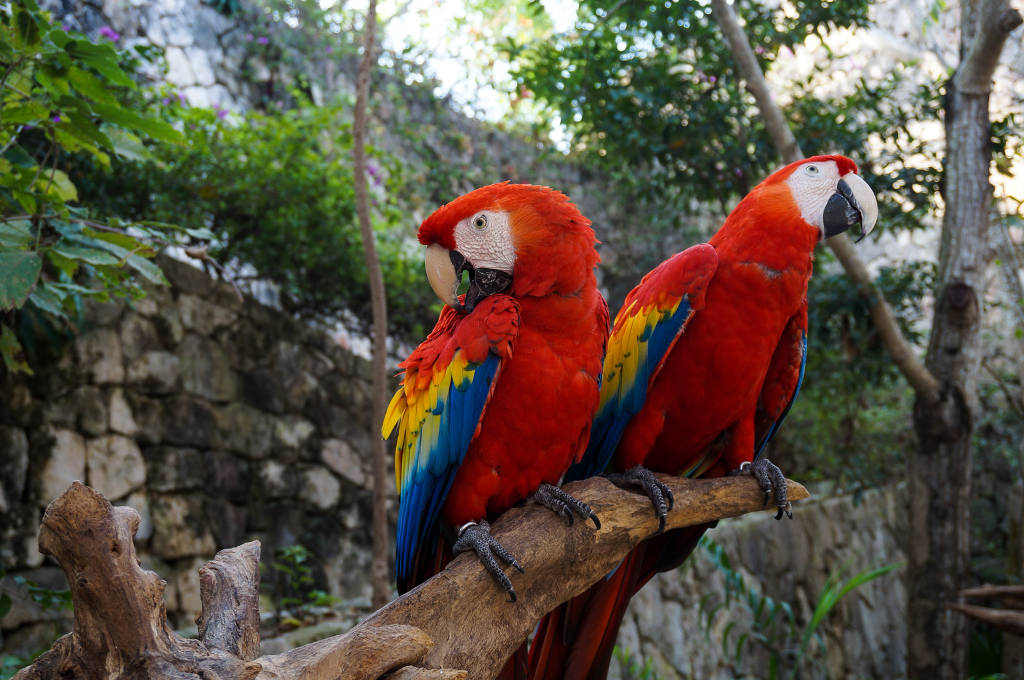 Xcaret Park, Mexico